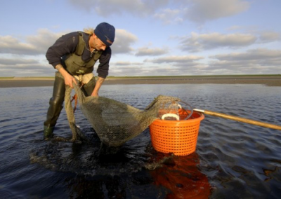 Testing for quarantaine regulations shellfish industry